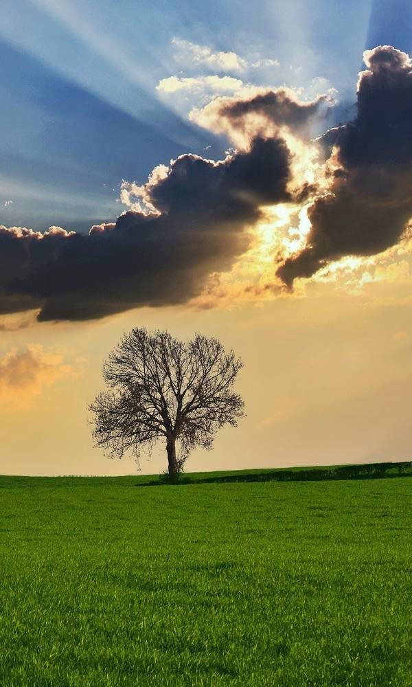 Bäume und Kraftplätze